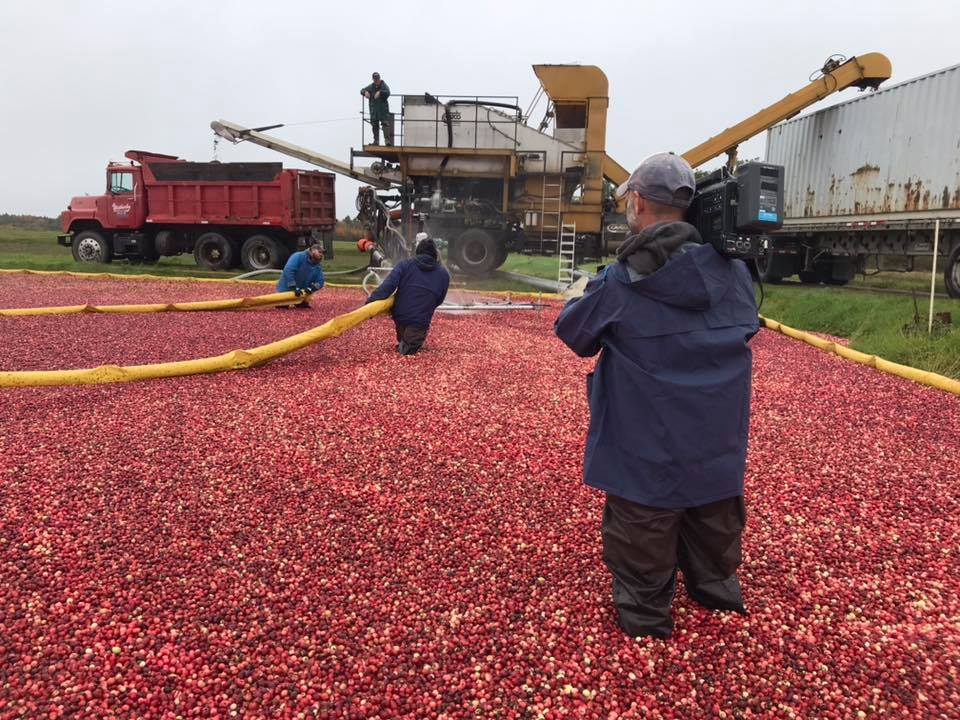 Cranberry Harvest - This Week In Agribusiness