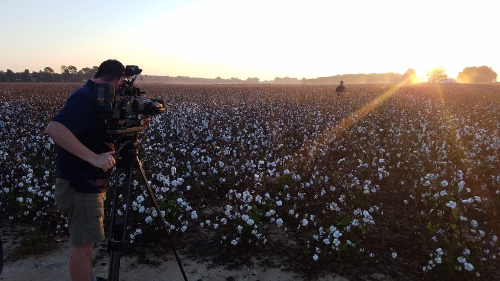 Arkansas Cotton Field - BASF Agricultural Solutions